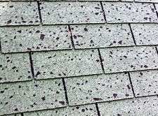 Steel Roofing: Hail, Hail the Gang's all Here