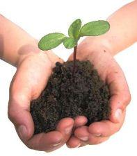 Site Preparation Part III: Soil Moisture Content