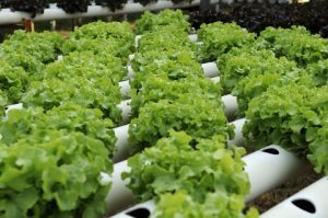 8 Foods You Can Grow in Your Pole Building All Year