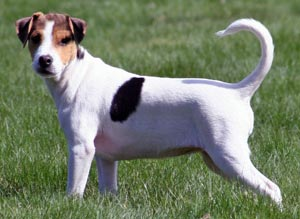 Dog With Long Tail