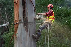 Arborist or Tree Feller