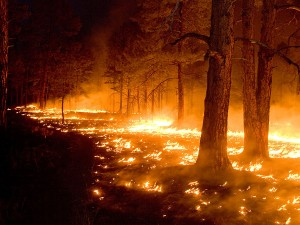 Protection from Wildfires Part II