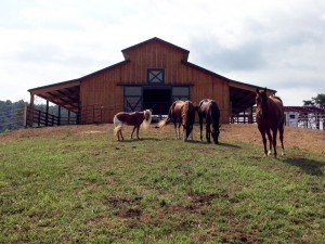 Hansen Buildings Horse Barn