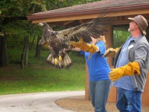 Wildlife Rebilitation Facilities