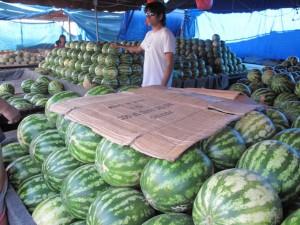 Watermelon Barns
