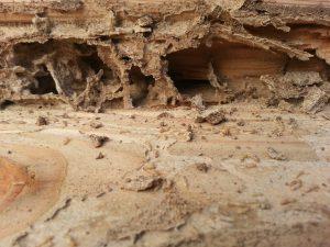 lumber damage