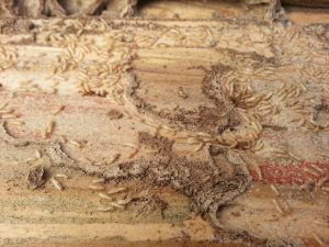 Termites and Pole Barns